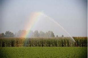 Picture for category Agricultural Irrigation